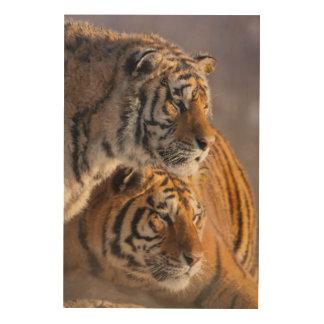 Deux tigres sibériens ensemble, la Chine Impression Sur Bois