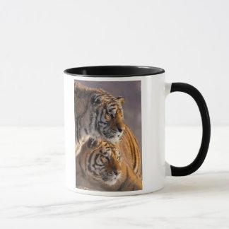 Deux tigres sibériens ensemble, la Chine Tasses