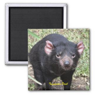 Diable tasmanien aimant