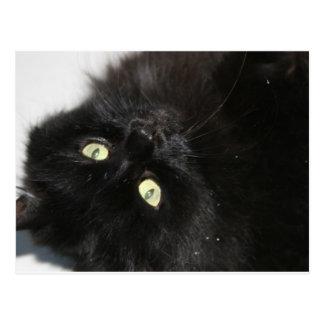Diabola le chat du diable carte postale