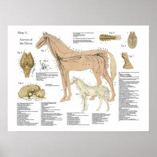 Diagramme d'affiche d'anatomie de système nerveux poster