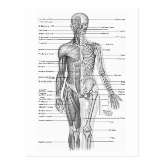 Diagramme humain d'anatomie cartes postales