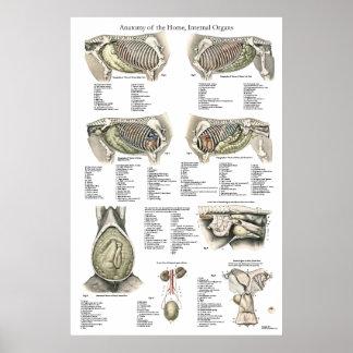 Diagramme interne d'affiche d'anatomie de cheval poster