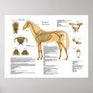 Diagramme squelettique d'affiche d'anatomie de poster