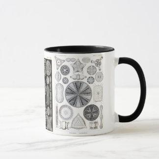 diatomée, diatomée, navicula mug