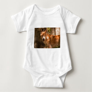 Dingo australien body