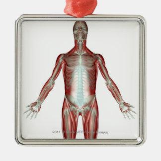 Disposition de tous les muscles au corps humain ornement carré argenté