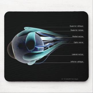Disposition de tous les muscles dans l'oeil humain tapis de souris