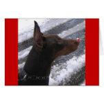 Dobermann avec la carte rouge de vacances de nez