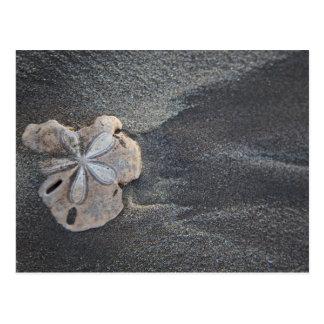Dollar de sable sur le sable carte postale