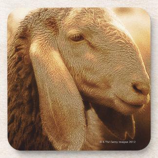 Dolomites à oreilles longues de moutons, Italie Sous-bock