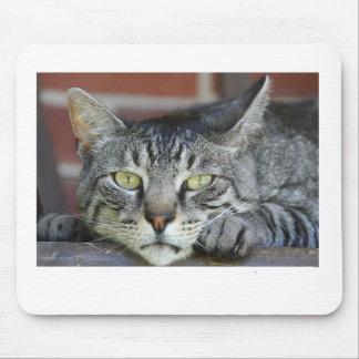 domestique-chat tapis de souris