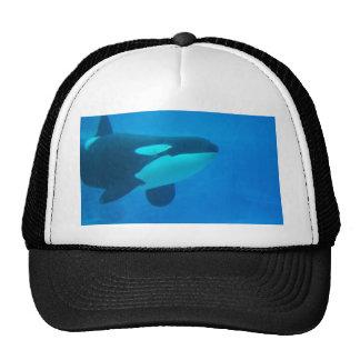 d'orque d'épaulard bleu sous l'eau casquette