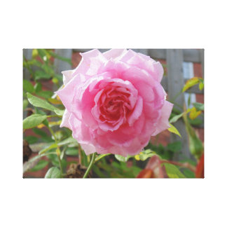 Doucement rose de rose toile