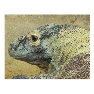 Dragon de Komodo Cartes Postales
