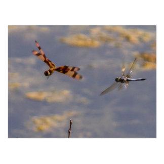 Dragons en vol carte postale