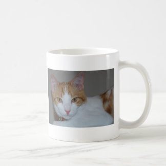 droit mug