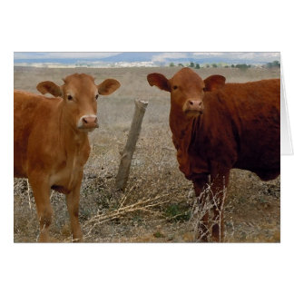 Drôle obtenez le puits - vache rouge l'humour carte de vœux