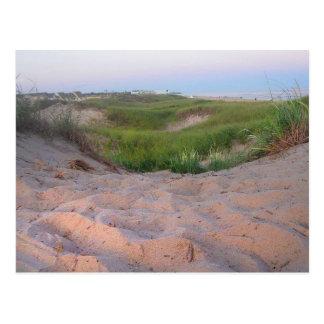Dunes dans Montauk Cartes Postales