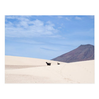 Dunes de Corralejo, Fuerteventura, Îles Canaries, Carte Postale