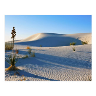 Dunes transversales, yucca, lumière de début de la cartes postales