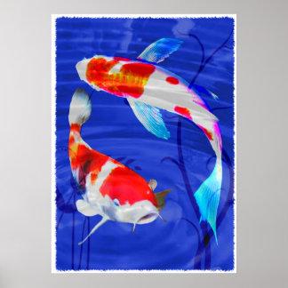Duo de Kohaku dans l'étang bleu profond Affiches