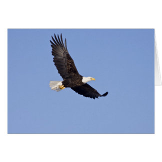 Eagle chauve américain carte de vœux