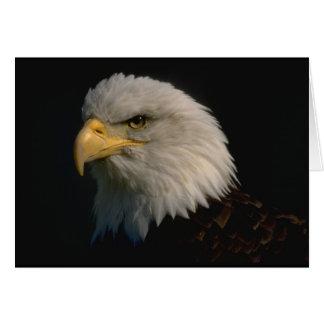 Eagle chauve américain cartes