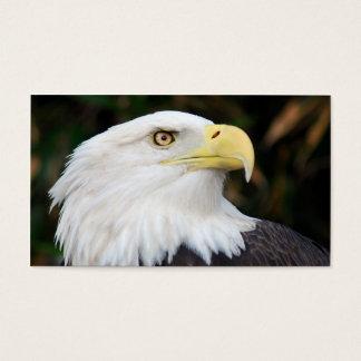 Eagle chauve américain cartes de visite