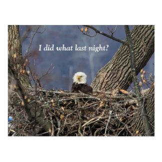 Eagle chauve ayant un mauvais jour de cheveux carte postale