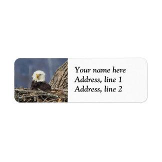 Eagle chauve ayant un mauvais jour de cheveux étiquette d'adresse retour