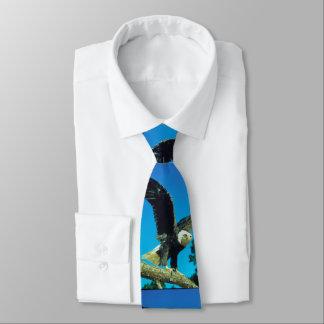 Eagle chauve cravate