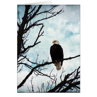 Eagle chauve dans un arbre avec le ciel bleu et carte de vœux
