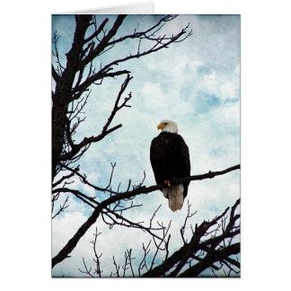 Eagle chauve dans un arbre avec le ciel bleu et cartes
