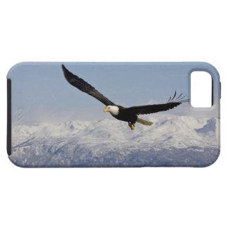 Eagle chauve en vol, leucocephalus de Haliaeetus, Coques iPhone 5 Case-Mate