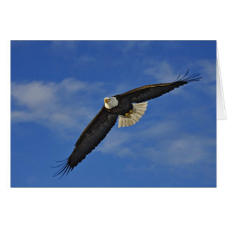 Eagle chauve en vol, leucocephalus de Haliaetus, Cartes