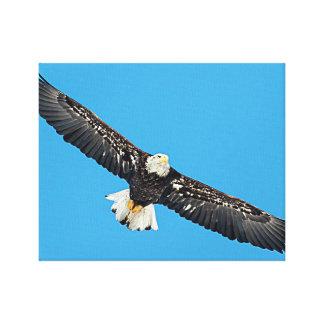 Eagle chauve en vol toile