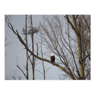 Eagle chauve et carte postale de Blackhawk