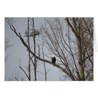 Eagle chauve et carte pour notes de Blackhawk -