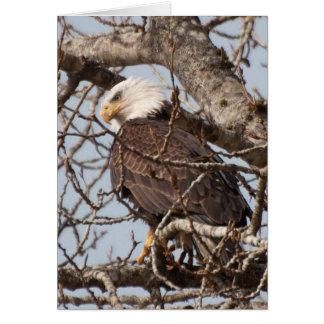 Eagle chauve été perché dans un arbre carte de vœux