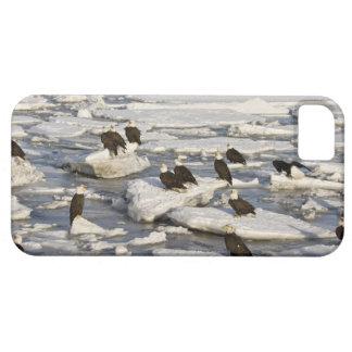Eagle chauve, leucocephalus de Haliaeetus, Homer, Coque Case-Mate iPhone 5