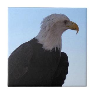 Eagle chauve petit carreau carré