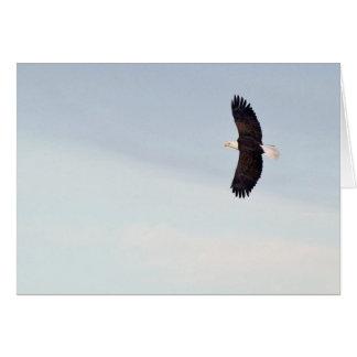 Eagle chauve pilotant la carte
