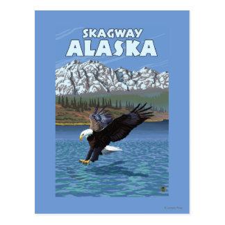 Eagle chauve plongeant - Skagway, Alaska Carte Postale