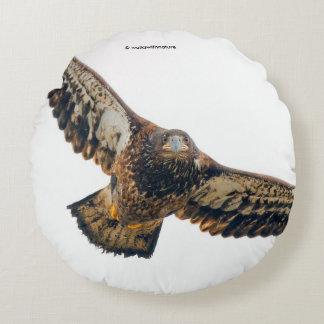 Eagle chauve renversant fait un survol coussins ronds