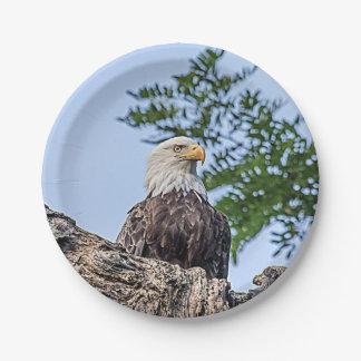 Eagle chauve sur une branche d'arbre assiettes en papier