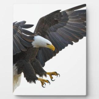 Eagle Photos Sur Plaques