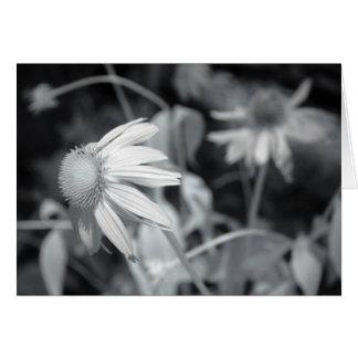 Echinacaea noir et blanc carte de vœux