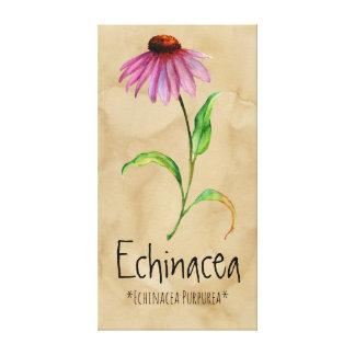 """Echinacée magique de plantes 13,22"""" x 25,52"""" toile"""
