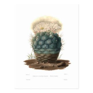 Echinocactus Carte Postale